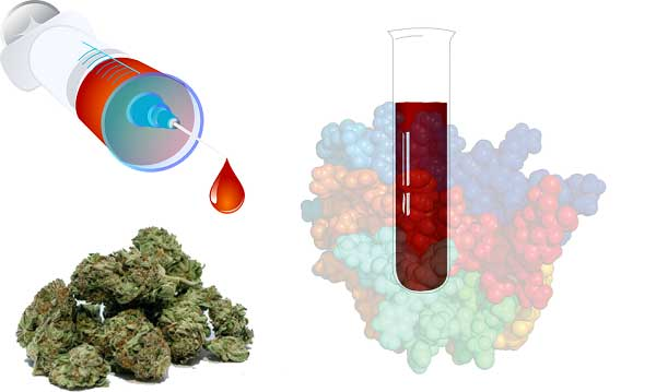 Marijuana Blood Test